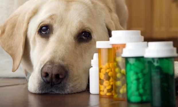 Запас лекарств для помощи собаке
