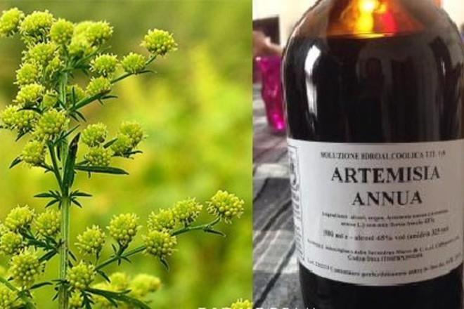 Лекарства, содержащие артемизинин