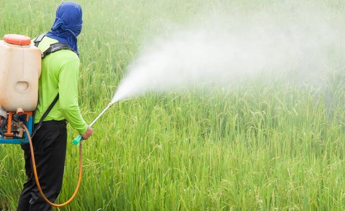 Использование ртути в качестве пестицида