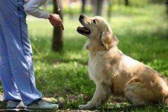 Собака и Изониазид