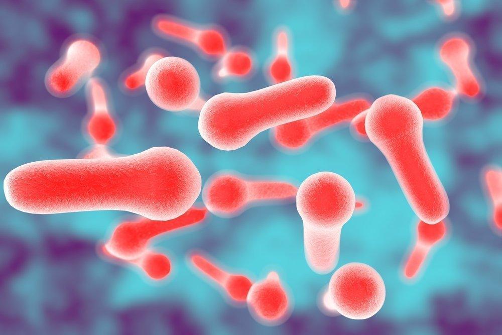 Палочка Clostridium botulinum
