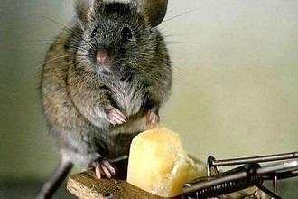 Укусила мышь