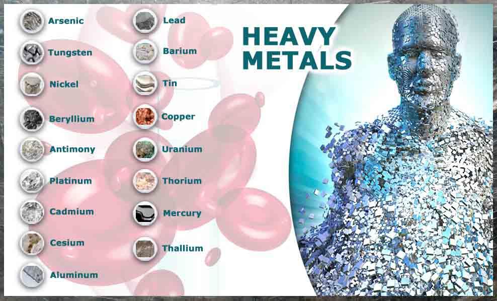 Накопление тяжелых металлов в организме