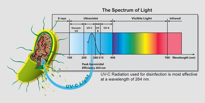 Бактерицидное действие ультрафиолета